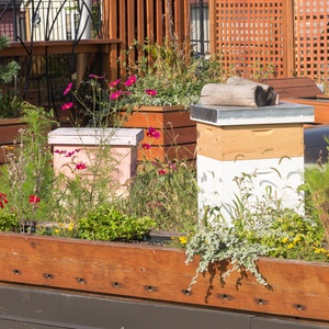 Green and Beekeeping roofs